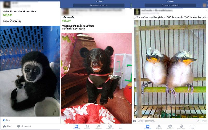 Illegal Wildlife Trade Thriving on Facebook