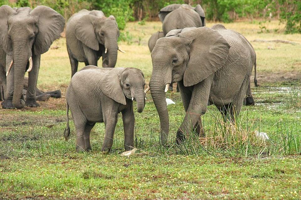 Elephants mourning in India