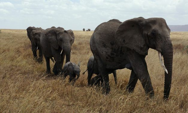 This Convicted Elephant Poacher Now Travels Across Kenya Working to Save Elephants