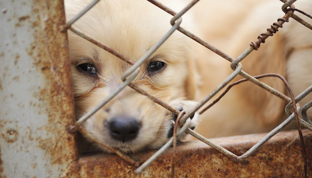 Sign: Ban The Horrific Dog Meat Trade in S. Korea