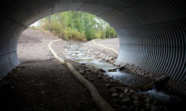 How Wildlife Bridges and Tunnels are Saving Animals' Lives