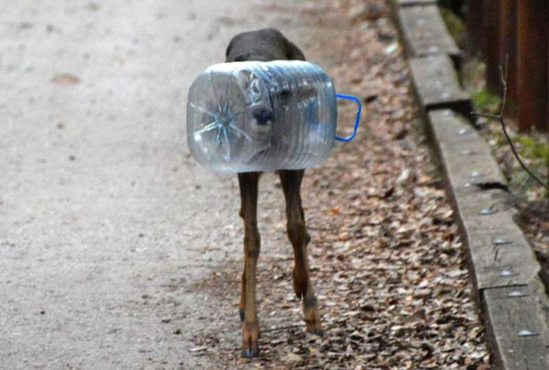 Viral Photo of Deer Stuck in Water Bottle Shows Just How Deadly Plastic is to Wildlife