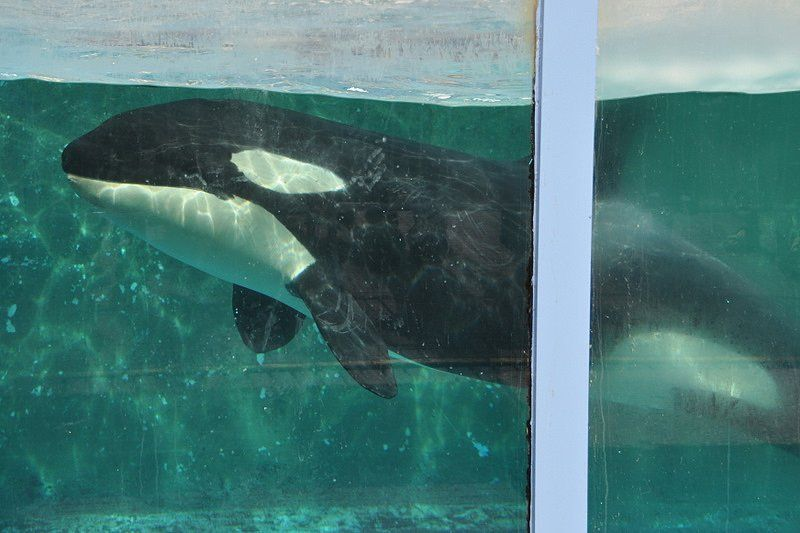 Bill Banning Whale and Dolphin Captivity Passes Canadian Senate