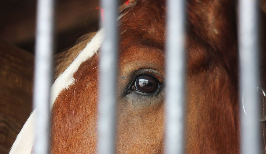 SIGN: Save 1,000 Wild Horses from Being Rounded Up and Slaughtered