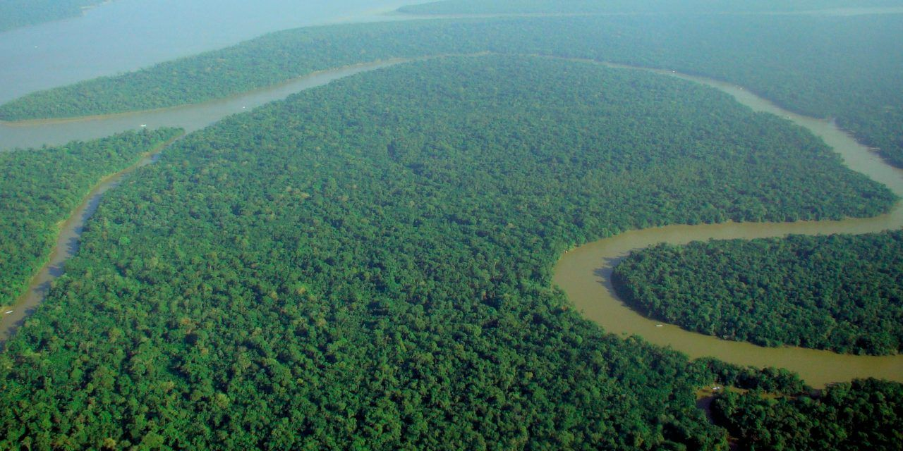 Saving the Amazon Rainforest (Still)