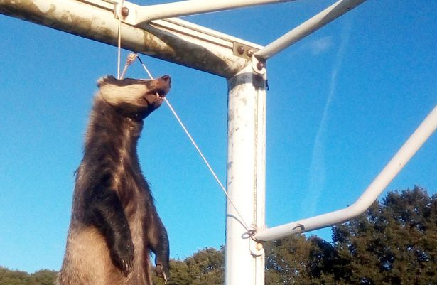 SIGN: Justice for Badger Roped Up and Hanged on Soccer Field