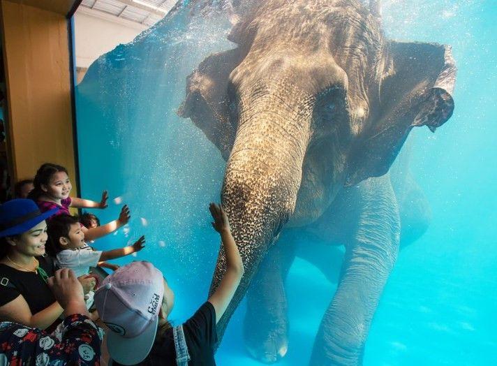 SIGN: Shut Down 'Elephant Swimming Show' at Cruel Zoo