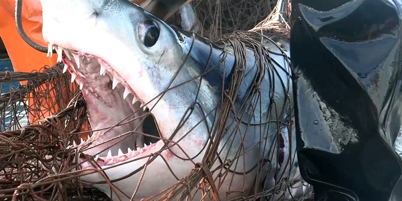California Has Officially Banned Deadly Driftnets in Commercial Fishing