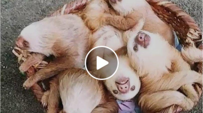 baby sloths basket