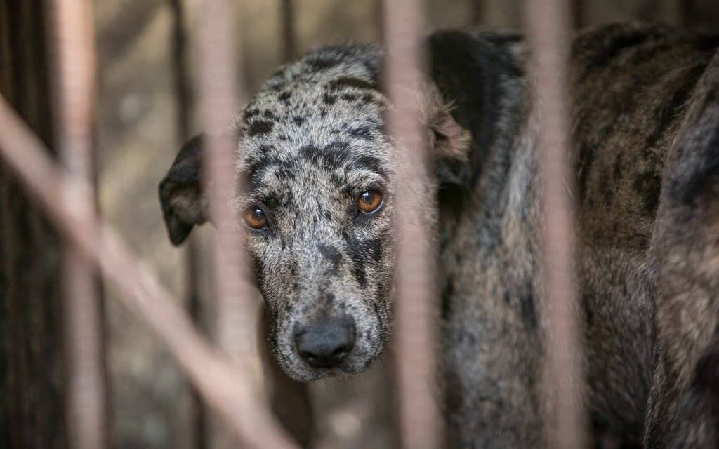S. Korea's Largest Dog Meat Slaughterhouse Is Now CLOSED!