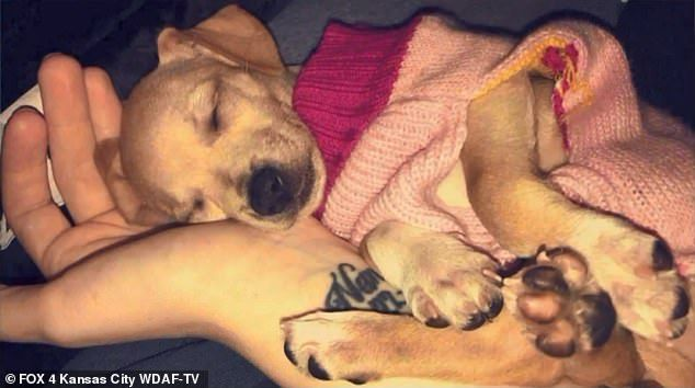 SIGN: Justice for Dog Stabbed in the Neck in Front of Terrified Children