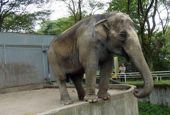 SIGN: Free Miyako, Elephant So Lonely she Chews on Metal Bars