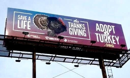 'Save A Life' Billboard Gives Turkeys Something to be Thankful For