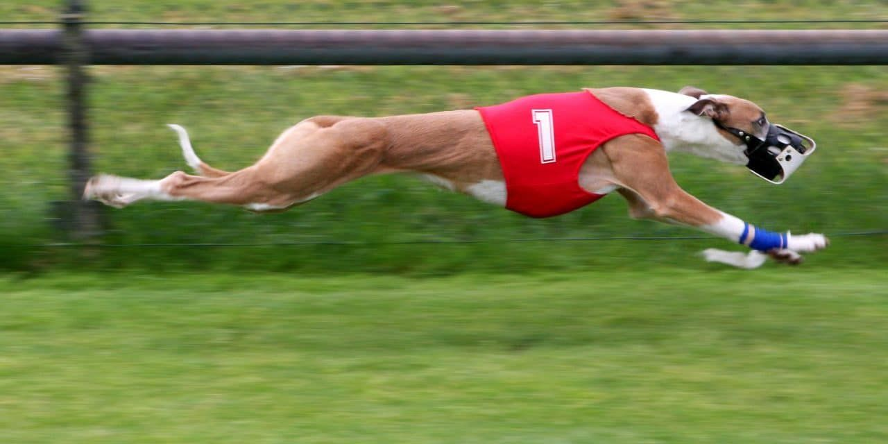 Dog Racing Banned in Florida – Thousands Need Homes