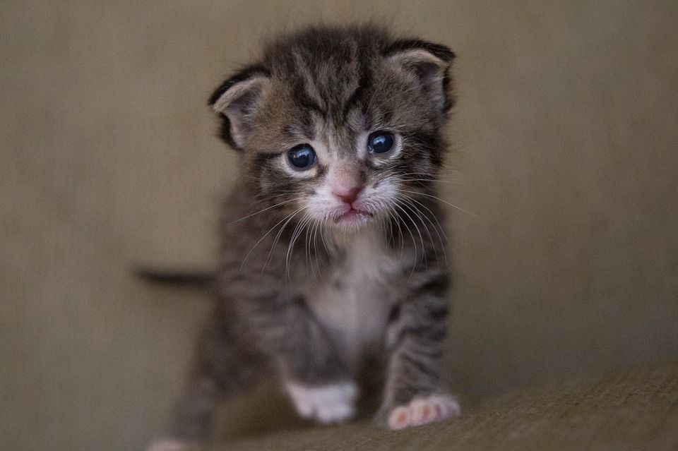 Kitten Abandoned in Dumpster Now Safe and Loved in Foster Home