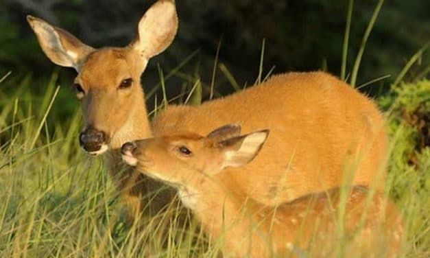 JUDGE ORDERS HUNTER TO WATCH 'BAMBI' AS PART OF POACHING SENTENCE