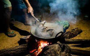 boiled pangolin