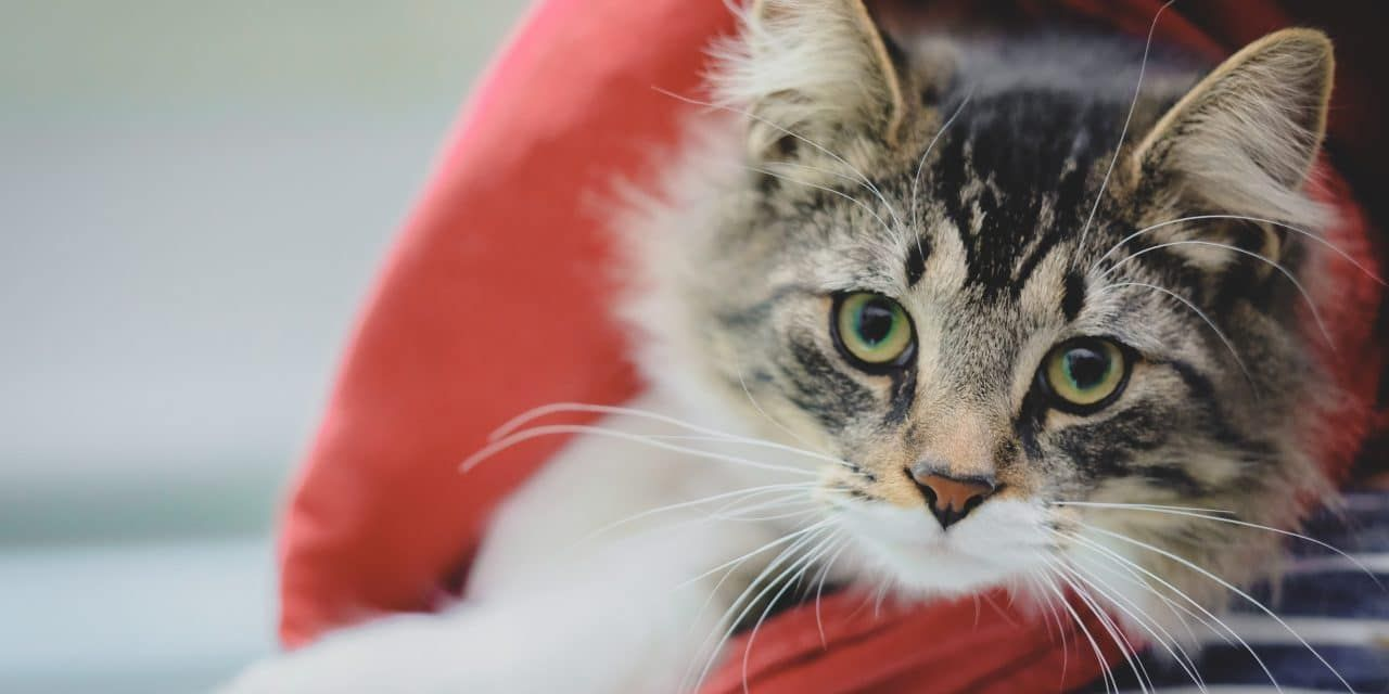 Kitten Shipped 700 Miles from Home After Climbing into Cardboard Box