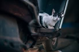 "Meet 'Sparky,"" Kitten Rescued from Inside Car Engine"