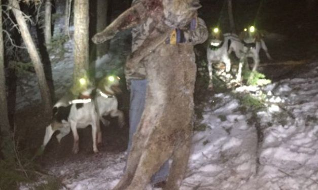Mountain Lion Poacher Convicted of Felony, But Gets No Jail