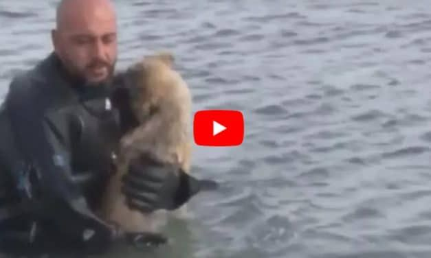 VIDEO: Police Diver Smashes Through Ice to Save Puppy from Frozen Lake