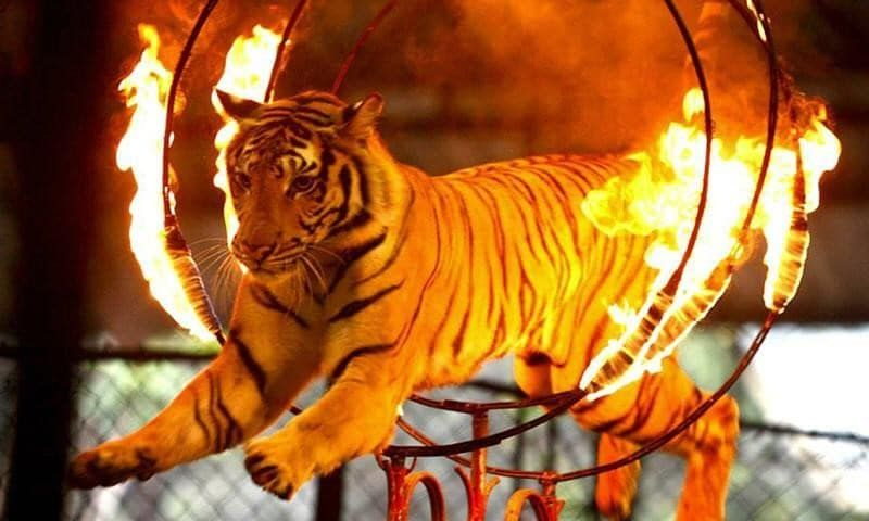 Victory! New Jersey Officially Bans Exotic Animal Acts