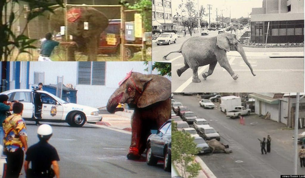 Scenes from the tragic and brutal death of Tyke the elephant in Hawaii. Help protect animals: Join Lady Freethinker.