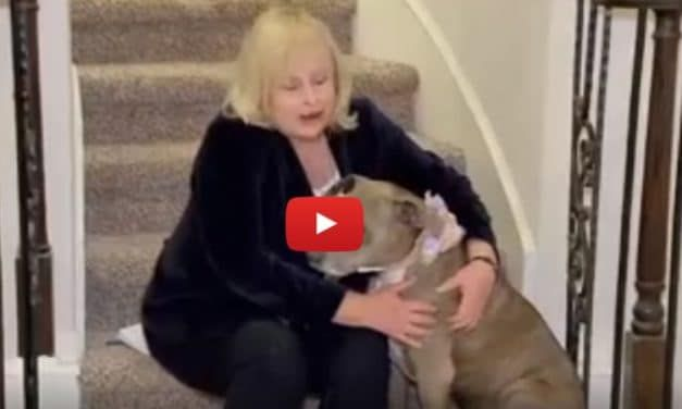 VIDEO: Dog Missing for 6 Years Reunites with Family