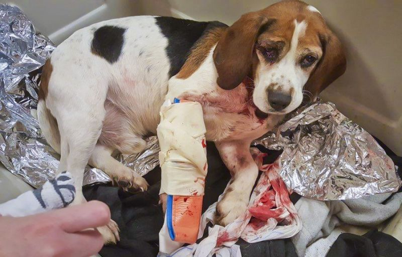 SIGN: Justice for Dog Hurled from Moving Car on NY Highway