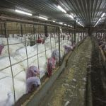 "Iowa ""Ag Gag"" Law Criminalizing Undercover Animal Cruelty Investigations Struck Down"