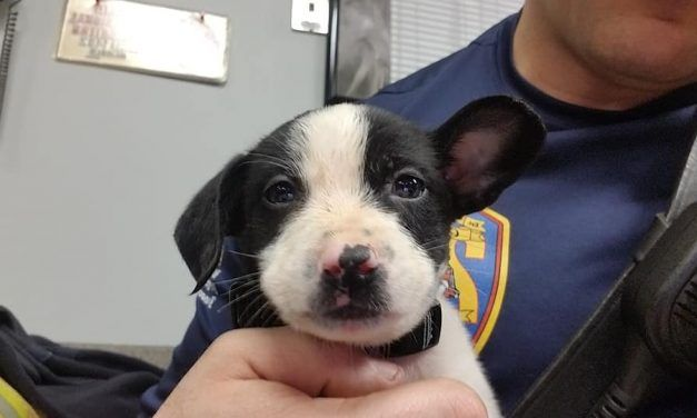 Firefighter Rescues Stranded Puppy – Then Gives Him A Forever Home