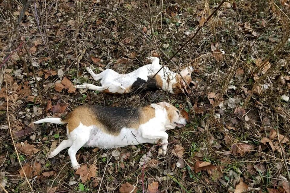 SIGN: Justice for Dogs Shot and Dumped in Field Like Trash