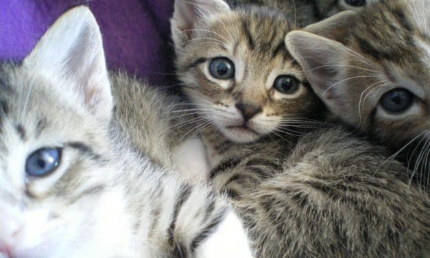 Singapore Authorities Bust Man Trying to Smuggle Kittens In His Pants