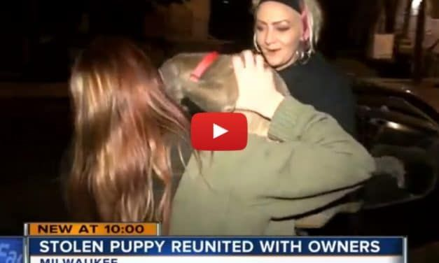 VIDEO: Tearful Reunion with Dog Kidnapped at Gunpoint by Carjackers