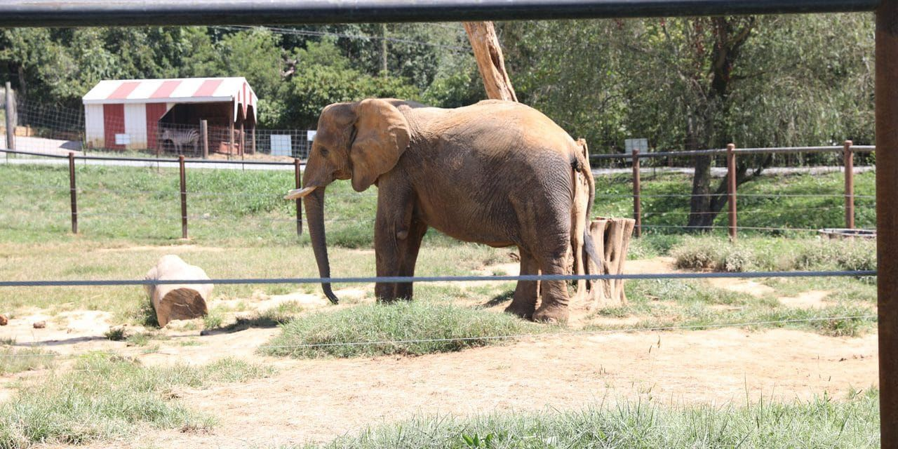 The 2018 List of 10 Worst Zoos for Elephants is Out