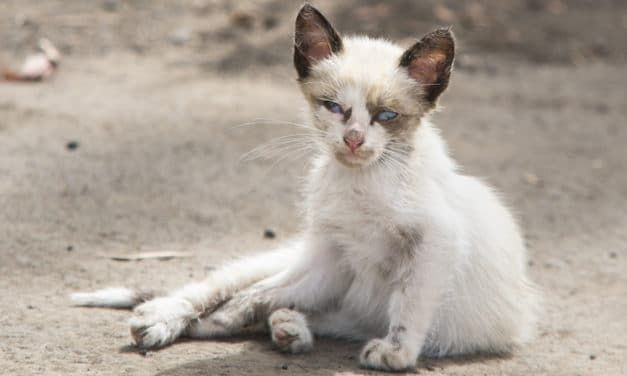 SIGN: Stop Killing Animals with Torturously Cruel 1080 Poison