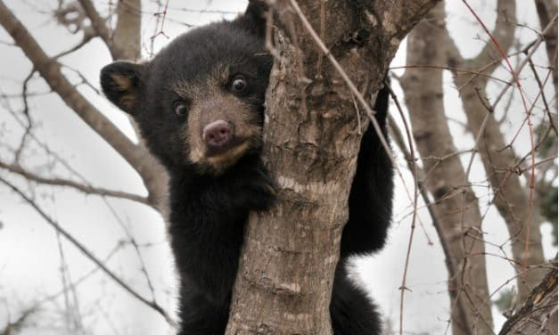 SIGN: Justice for Bears Ripped to Shreds by Ruthless Hunting Dog Operation