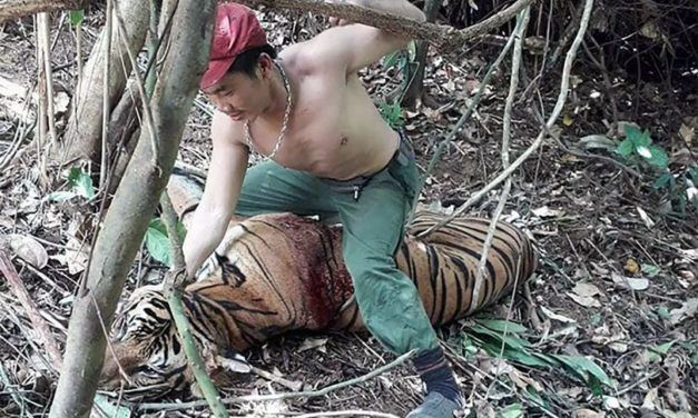 SIGN: Justice for Tiger Brutally Punched in the Face by Poacher
