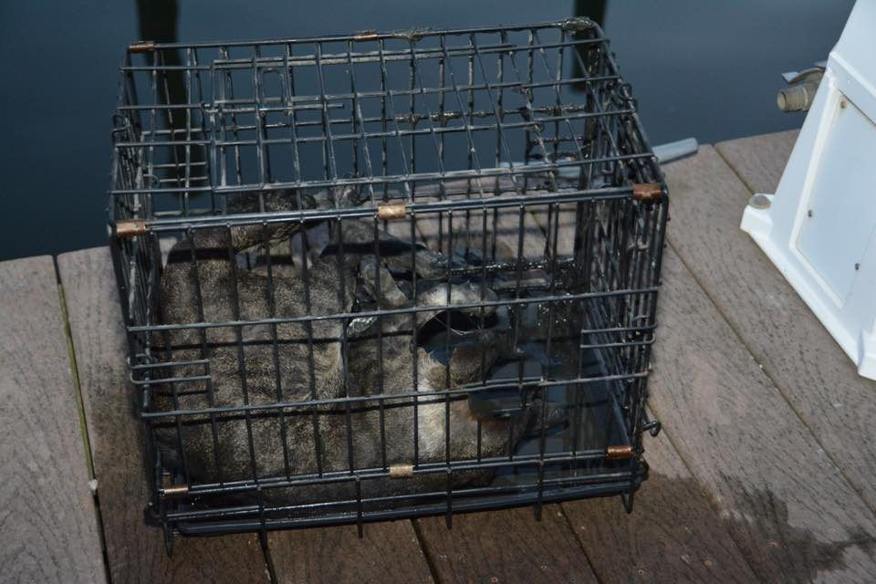 SIGN: Justice For Cat Locked In Cage and Thrown into the Ocean