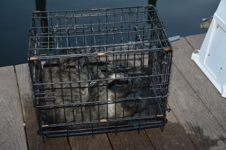 Cat drowned in metal cage
