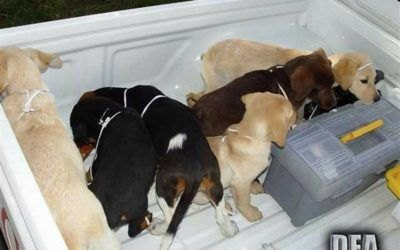 Vet who Smuggled Heroin Inside Puppies' Bodies Sentenced to Prison