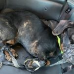 SIGN: Justice for Dog Wrapped in Duct Tape and Dumped in Freezing Ditch