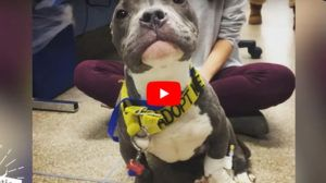 VIDEO: Pit Bull Puppy Found Tied to Pole Now Has the Best Life