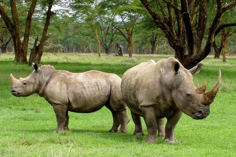 Good News! Rhino Poaching is Down 25% in S. Africa