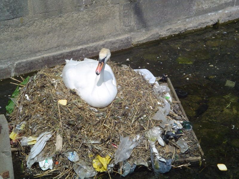 swan plastic waste