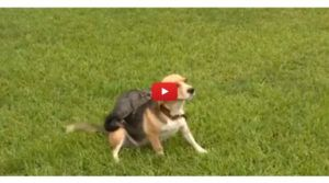 VIDEO: Dog Adopts Orphaned Possum After Losing Her Own Pups