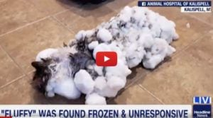 VIDEO: Cat Frozen Nearly Solid Miraculously Survives