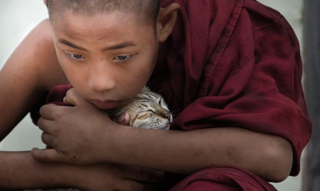 New Film Encourages the Religious and Spiritual to Extend their Compassion to Animals