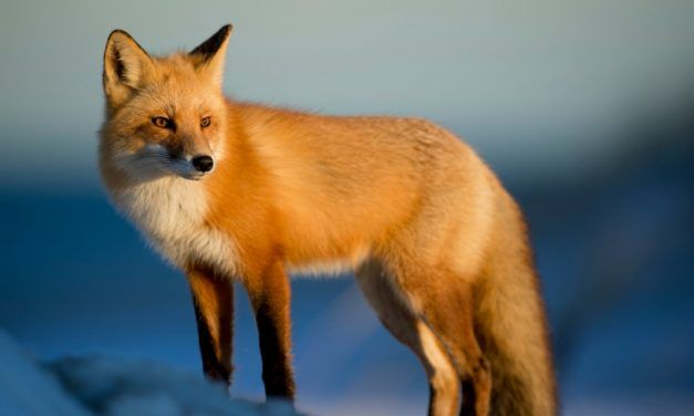 Hawaii May Become the First State to Ban Fur