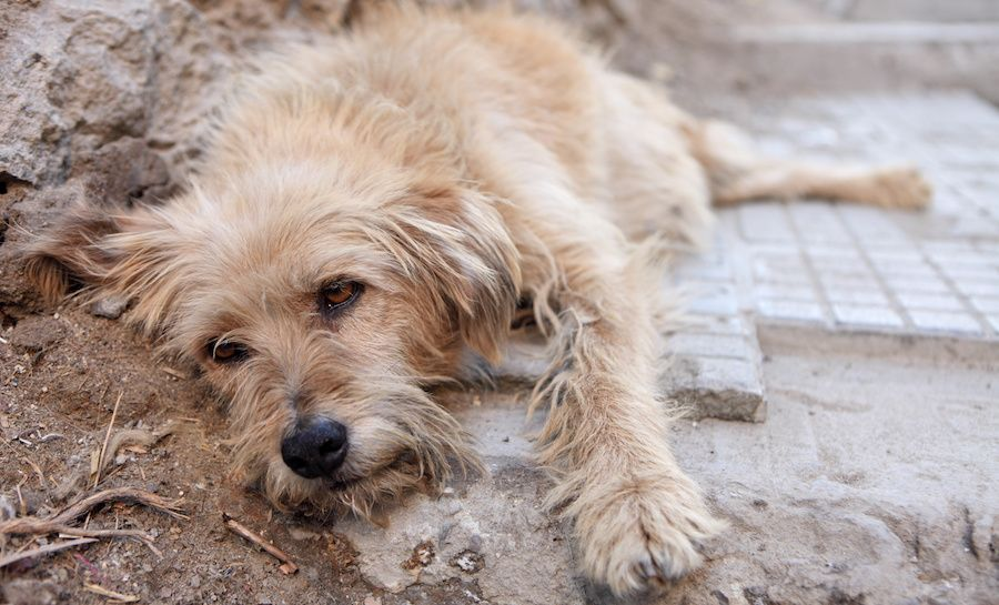 SIGN: Make Animal Cruelty A Felony in the United States